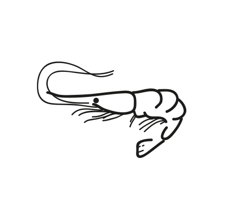camaron boreal Pandalus Borealis
