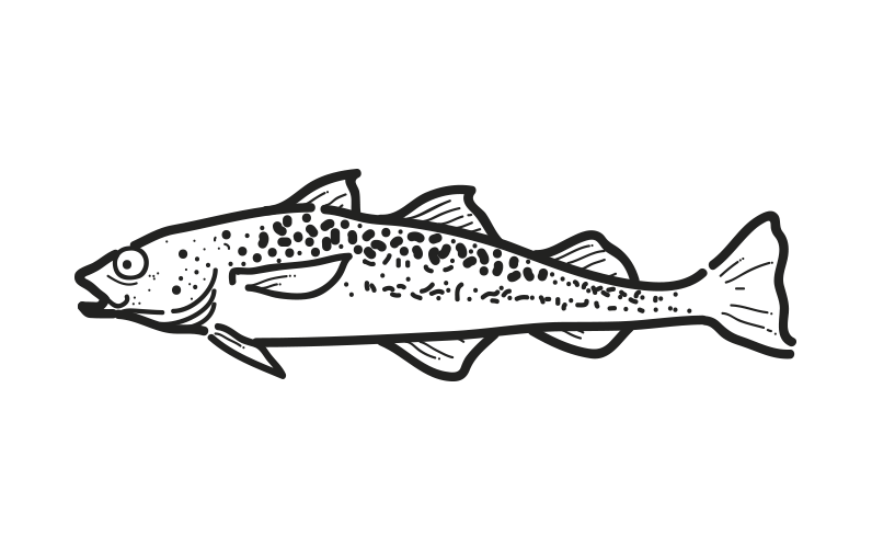 pez abadejo theragra chalcogramma