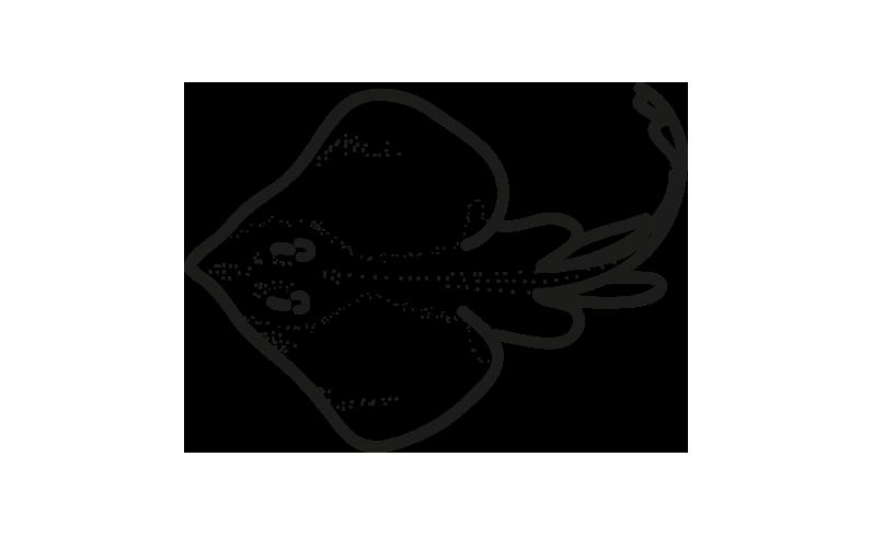 alas de raya raja spp frioantartic