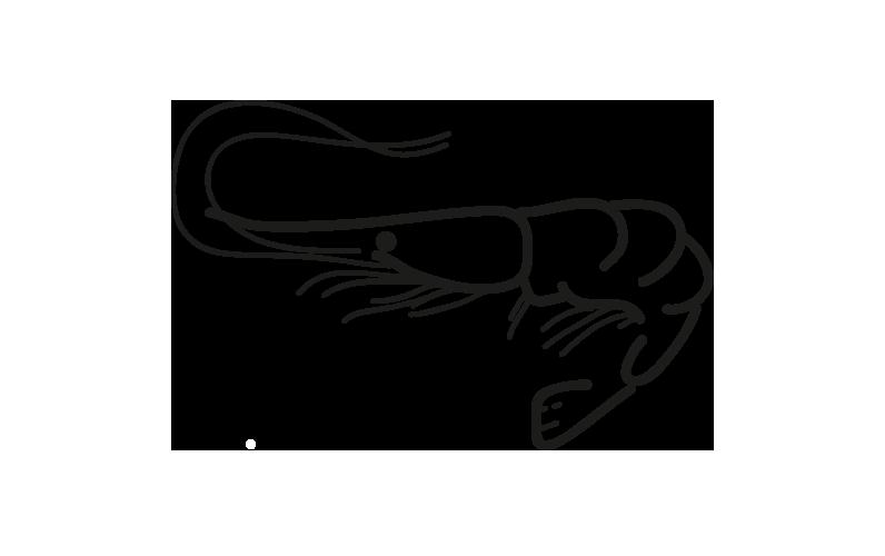 producto-ficha-camaron-boreal_frio-antartic