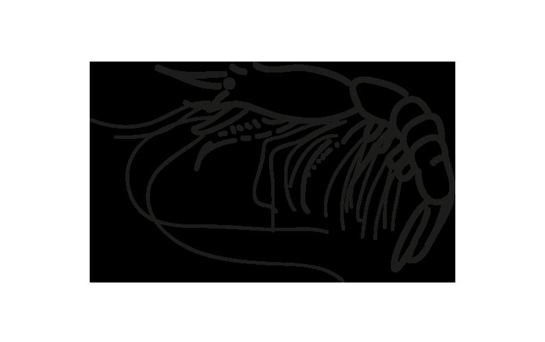 carabinero plesiopenaeus edwardsianus