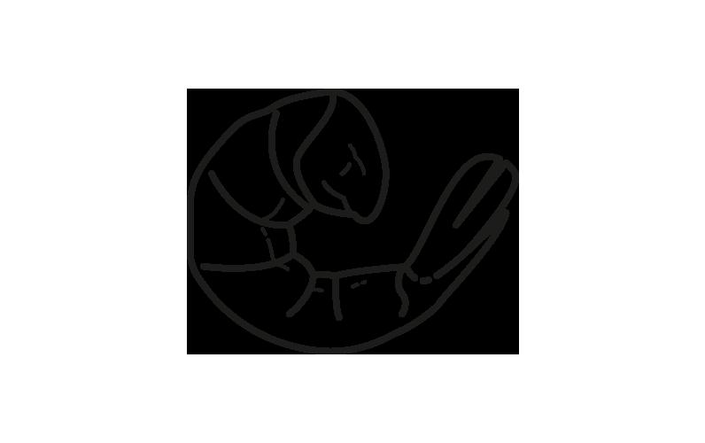 gamba pelada china solenocera melantho