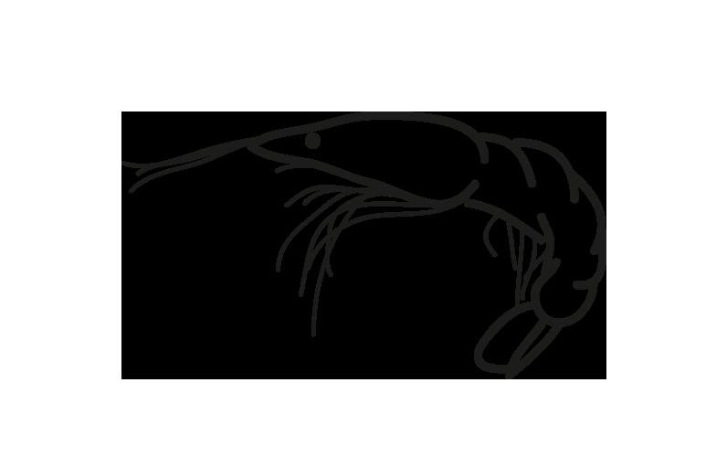 gambon argentino pleoticus muelleri