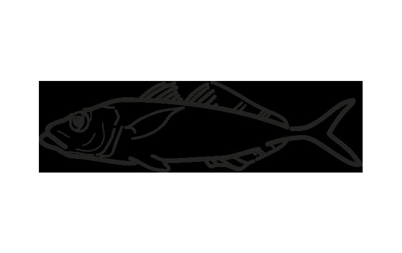 pez jurel trachurus trachurus