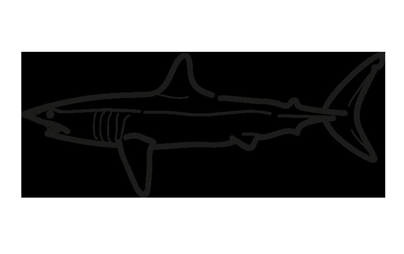 marrajo Isurus oxyrinchus frioantartic