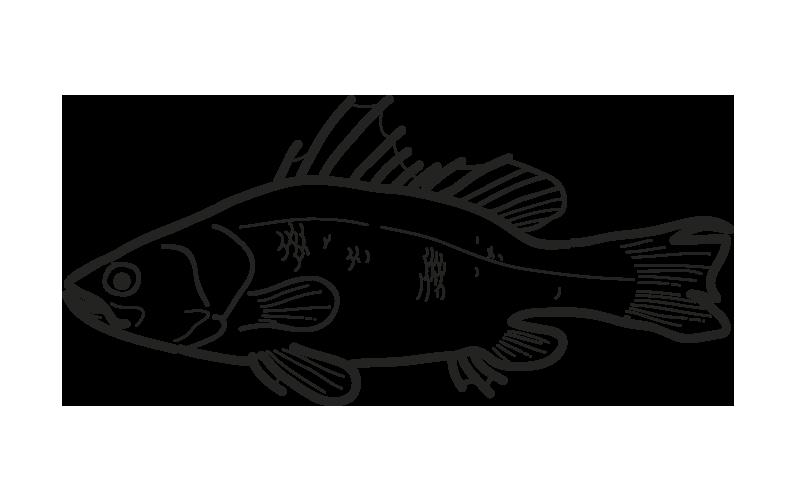 pez perca lates niloticus