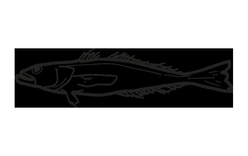 robalo dissostichus eleginoides