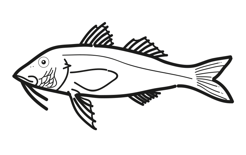salmonete pseudupeneus prayensis frioantartic