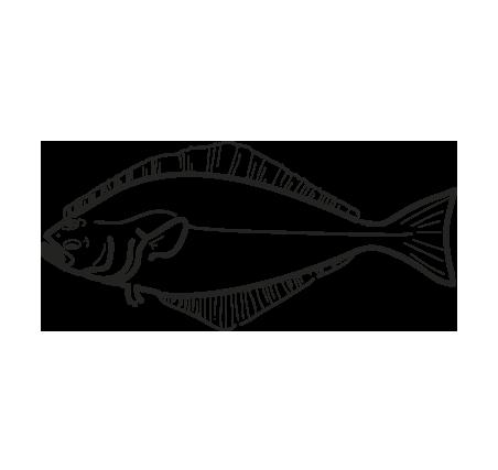 pez fletan blanco hippoglossus hippoglossus