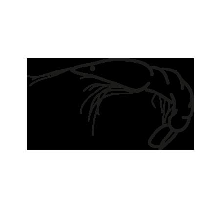 gambón argentino pleoticus muelleri