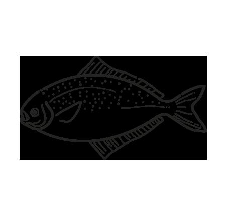 pez plano pampalito stromateus brasiliensis