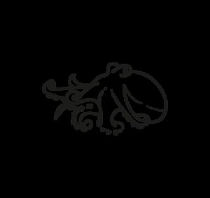 pulpo eledone cirrhosa octopus