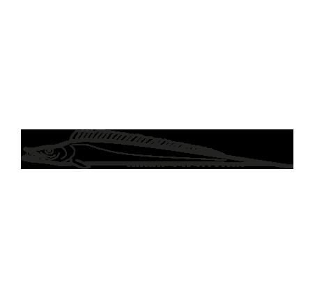 pez sable espada trichiurus lepturus