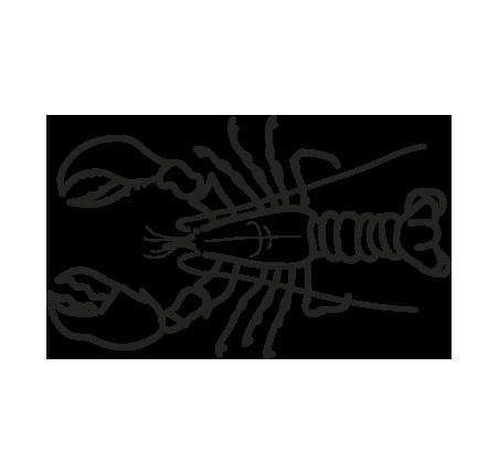 marisco bogavante canadiense homarus americanus