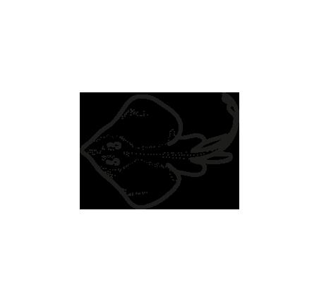 pescado congelado alas de raya raja spp frioantartic