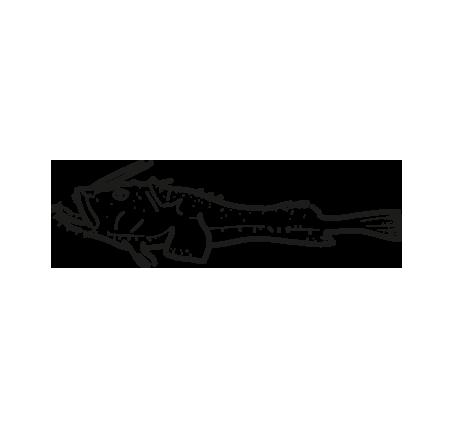 pescado rape lophius piscatorius lophius americanus lophius vomerinus