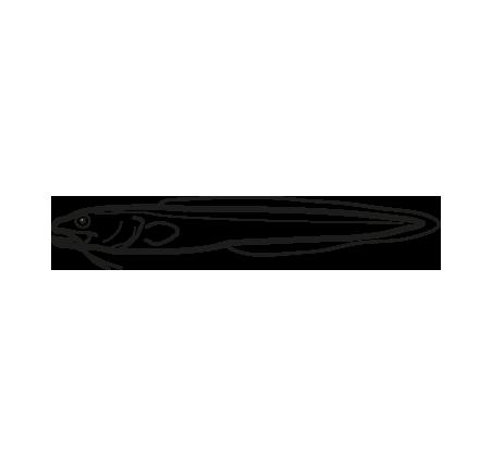 rosada genypterus blacodes