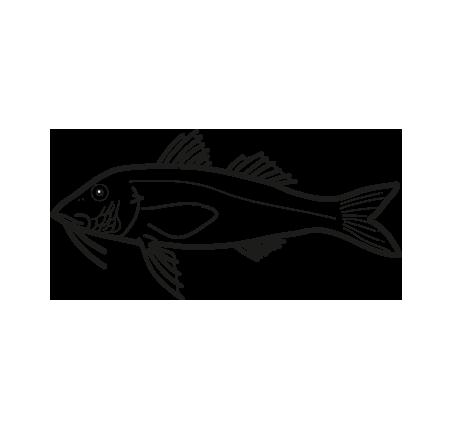 pescado congelado salmonete pseudupeneus prayensis