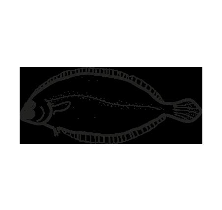 pez meiga glyptocephalus cynoglossus
